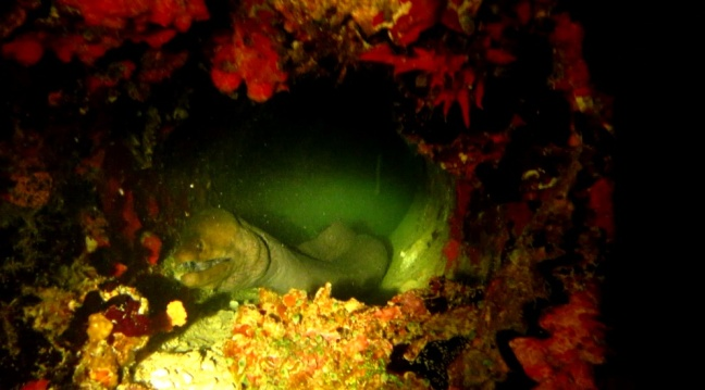 Moray in Wreck on Night Dive
